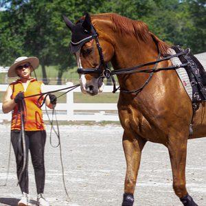 Roberson-Equestrian-Facility-Jessica-Wright-Horse-Training-Murfreesboro-tennessee