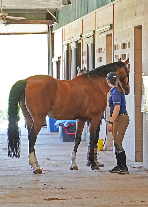 Roberson-Equestrian-Facility-Roberson-Equestrian-Facility-Horse-Boarding-Murfreesboro-Tennessee