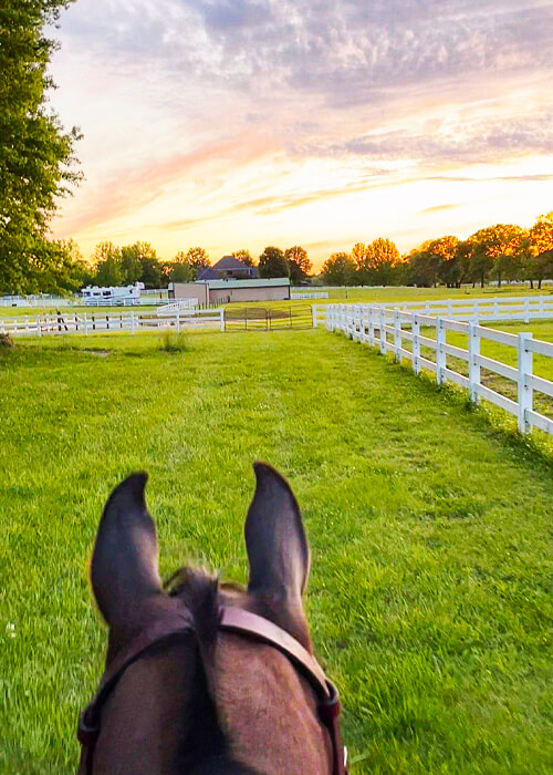 roberson-equestrian-facility-about-horse-lessons-nashville-tn-img-1(2)