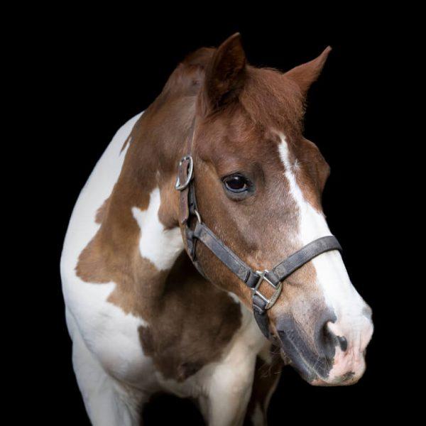 Prince Pony
